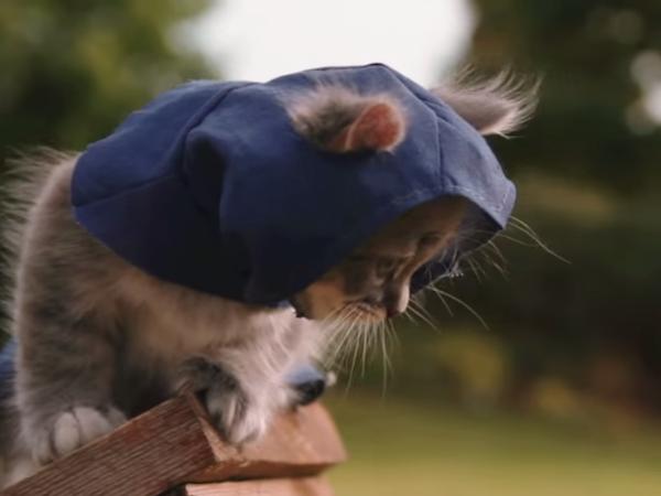 Les chats commencer dejas a preparer une guerre préparé vos armes il conte dominer le monde en plus d'internet!