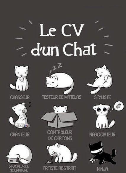Pourquoi le mailleurd métier du monde est être  un chats car: