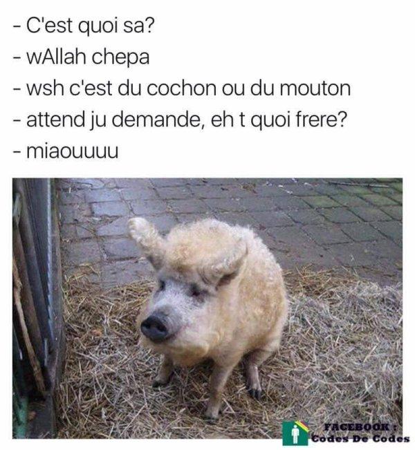 LES PARIS SONT OIUVERTS!