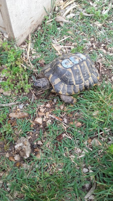 Mes deux tortues ^.^