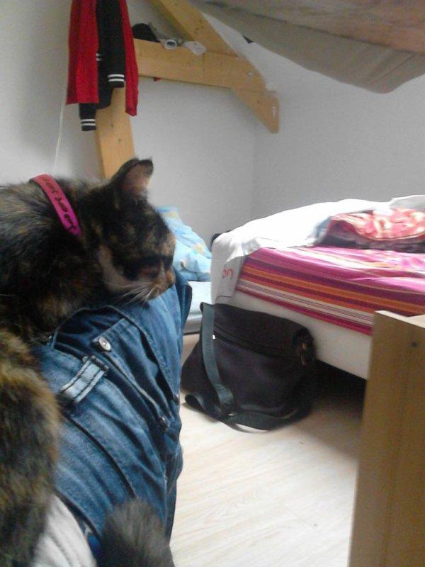 Mon chat. *-*♥(Mtnt pu de ce monde)