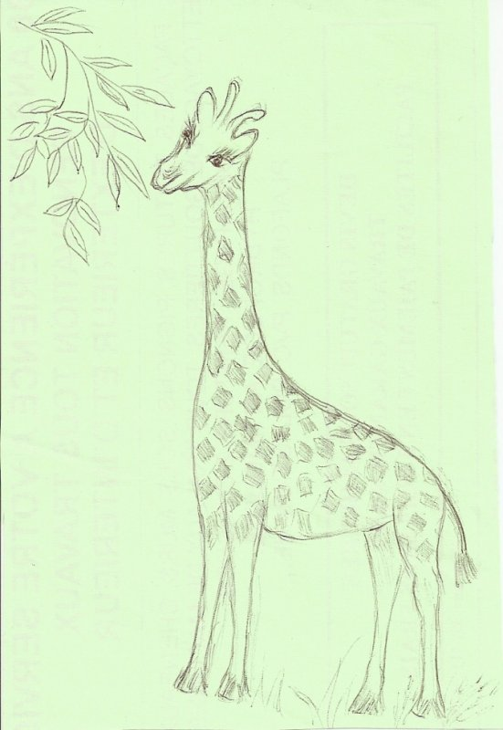dessin de ma belle-mére 86 ans décedé le6 janvier 2011