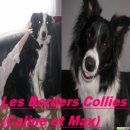 Photo de border-collie-2011
