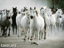 Photo de dreaming-horse