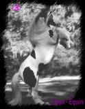 Photo de jeux-equin