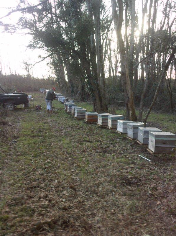 utilisation du terminator sur le terrain mais par l'avant de la ruche