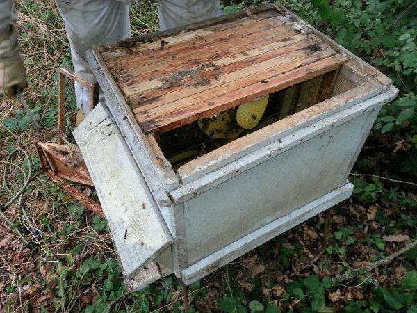 Sauvetage d'une ruche