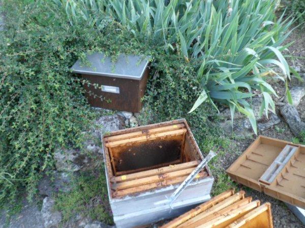 Récupération d'un essaim logé dans une boite aux lettres