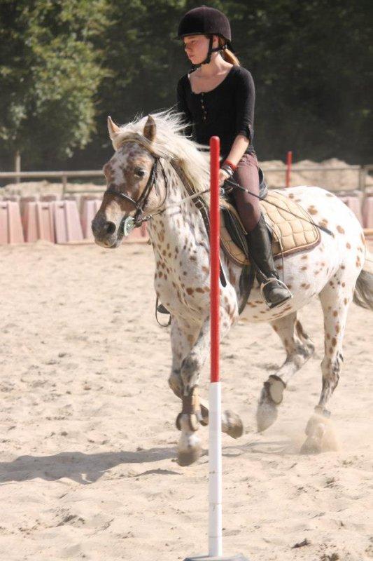 """La prochaine fois, quand vous entendrez : """" Ce ne sont que des chevaux"""", contentez vous de sourire, ils ne peuvent pas comprendre."""
