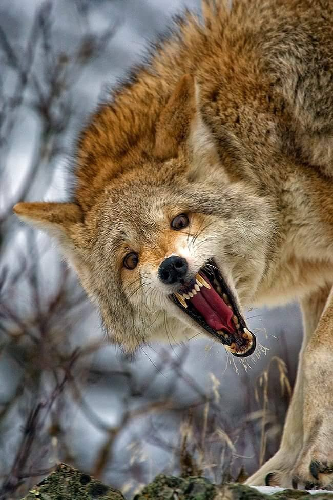 ♠•♠•♠  agressive   je  suis  ....   a  bon  entendeur