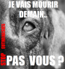 stop a l euthanasie animal!!!
