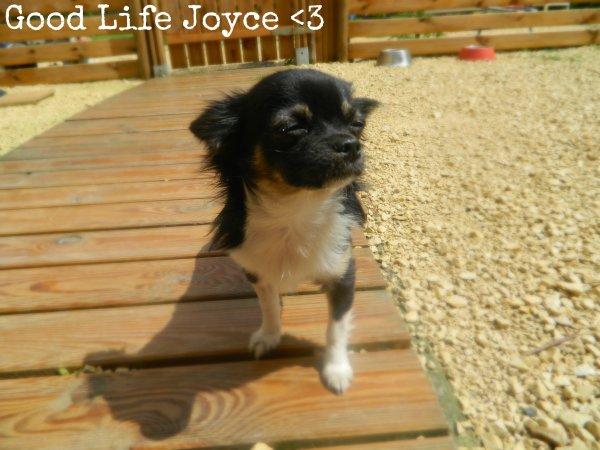 Good Life Joyce