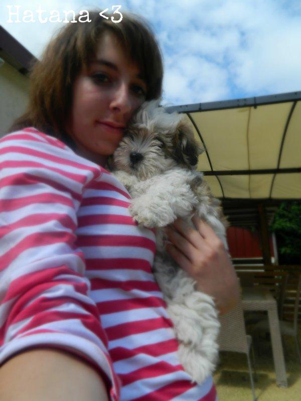 Moi & les chiens