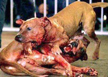 Arrêtons la cruauté envers les animaux