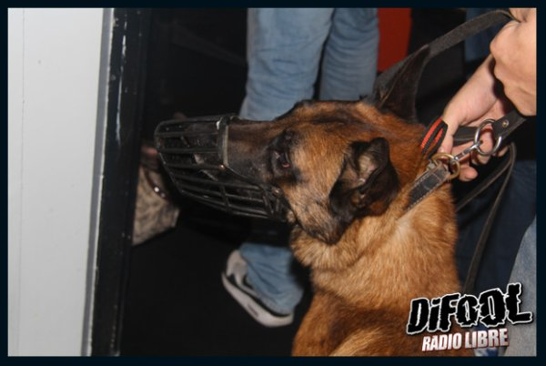 Dixy, Dream et Eson ( chien d'attaque )  dans la Radio Libre de Difool