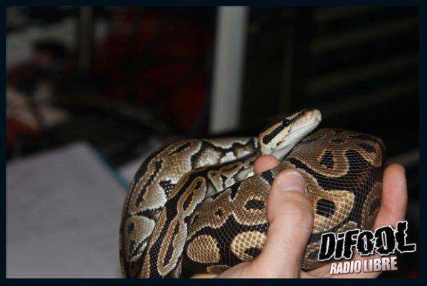 Nos amis les serpents pour le problème du mois!