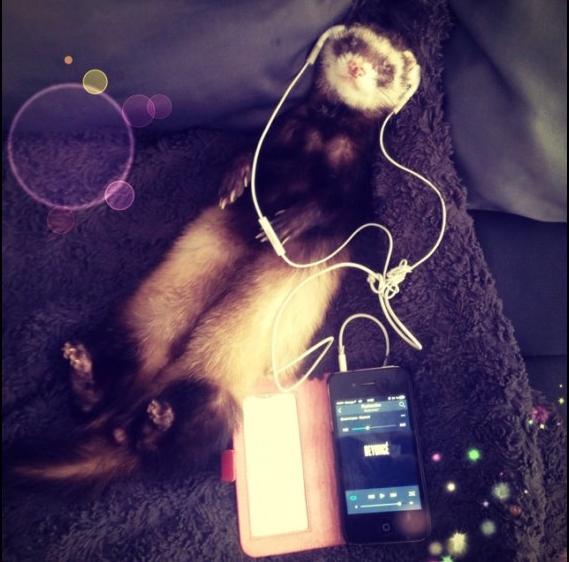 Même les animaux écoutent Skyrock! Voici le furet de Laureline: