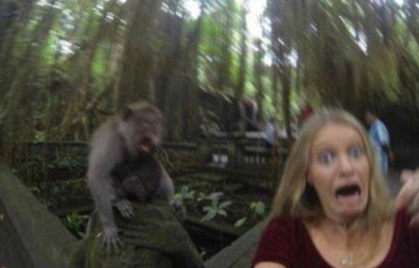 Voici le selfie raté à bali à cause de l'attaque de singe