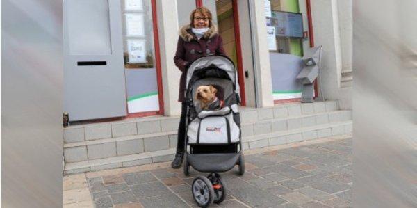 Voici la dame super classe qui balade son chien dans les rues de Beziers dans sa poussette