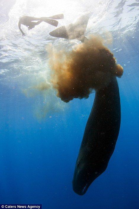 Difool t'en a parlé sur #Skyrock voici le cachalot qui défèque sur un plongeur ! #MorningDeDifool