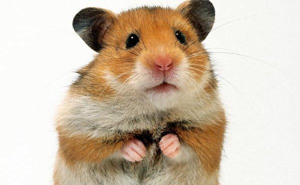 Il mange un hamster devant ses élèves !