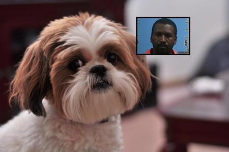 Sa compagne porte trop d'affection à son chien, il se venge sexuellement… sur l'animal !