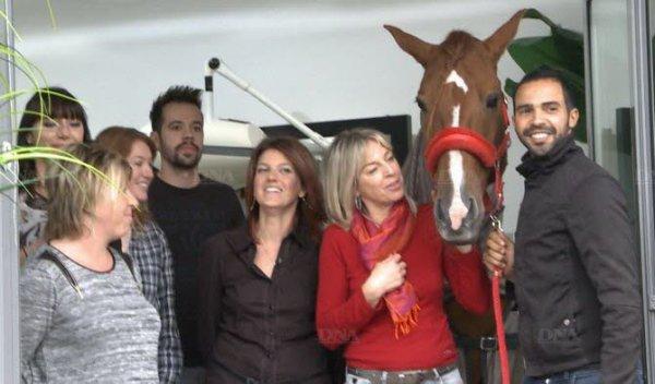 Un cheval chez le coiffeur !