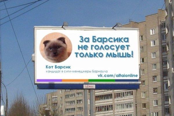 Un chat en tête des sondages pour des municipales en Sibérie !