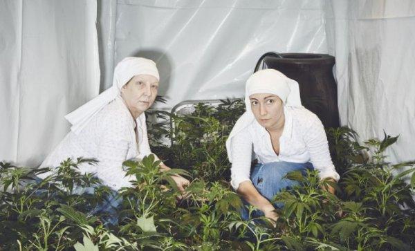"""VIDEO - En Californie, des """"religieuses"""" cultivent du cannabis pour guérir le monde !"""