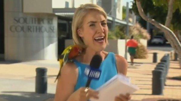 VIDEO - Une journaliste «attaquée» en plein direct par un perroquet !