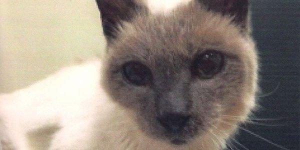 Scooter, le chat le plus vieux du monde à 30 ans !