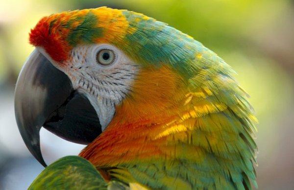 Une femme apprend que son mari est infidèle grâce à… leur perroquet !