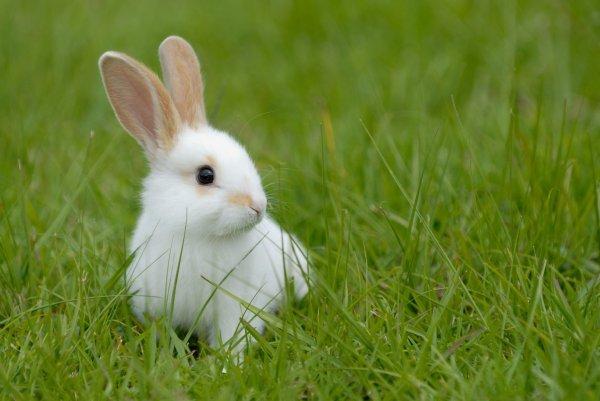 """Il tire sur sa tante qu'il a """"prise pour un lapin"""" !"""
