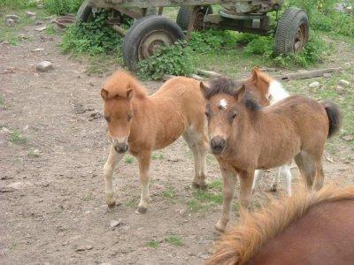 Virgule ; Le petit poney donc j'ai toujours pu rêvé ! ♥.
