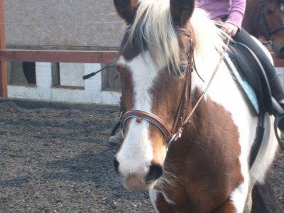Flicka, le cheval que tout le monde rêve