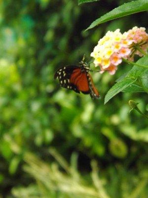 photos de l'ile aux papillons a Noirmoutier