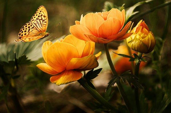 Bonjour belles âmes .Je vous souhaite une bonne journée dans la joie la paix et propérité dans toute sa sagesse.