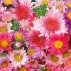 ce panier pleins de fleurs