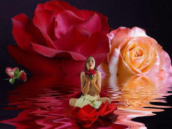 je toffre ces roses evader bon mercredi avec toute ma tendresse gros bisous flo