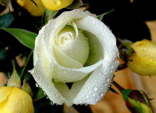 pour toi loreta bon week ma belle et joyeuse fetesgros bisous flo