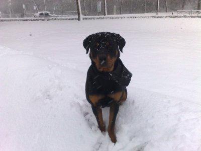 la neige c cool j adore !!!