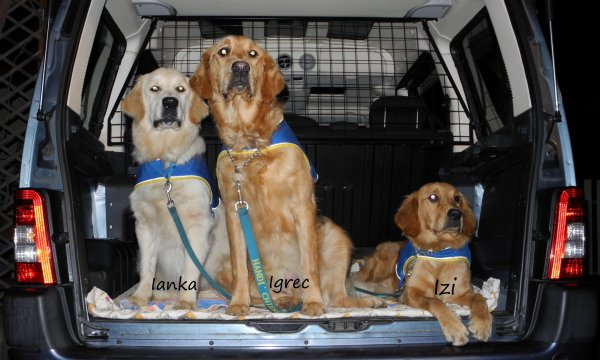 les futurs handi'chiens alsaciens ...
