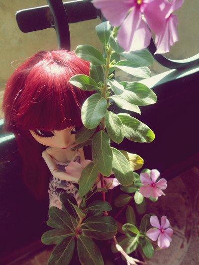 ~ Pot de fleurs ~