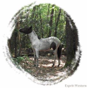 ★ Alicante mon premier cheval, ma premiere pouliche ★  Quelque chose que je n'oublieré jamais
