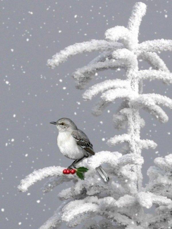 nos compagnons les oiseaux ...