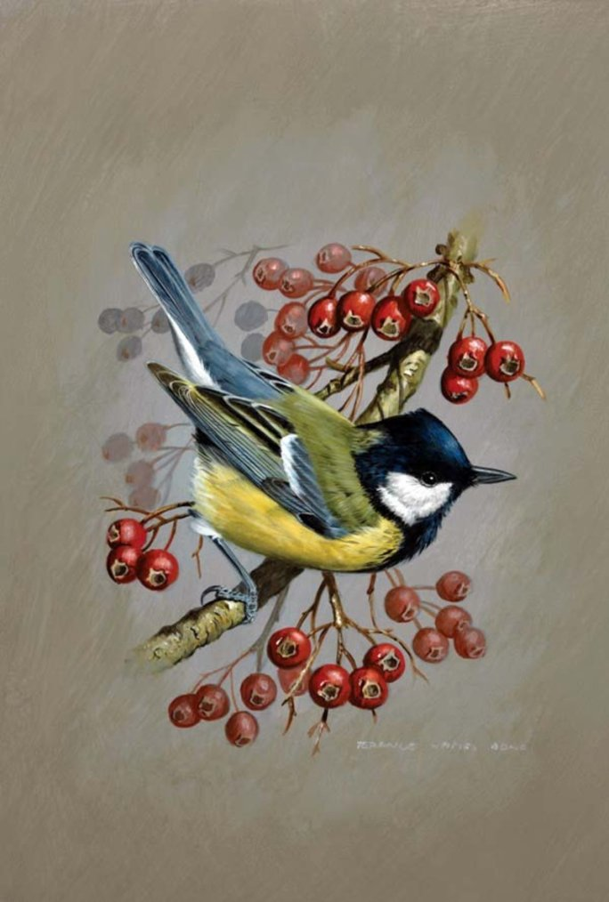 jolis petits oiseaux...