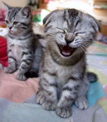 drôles d animaux !!!