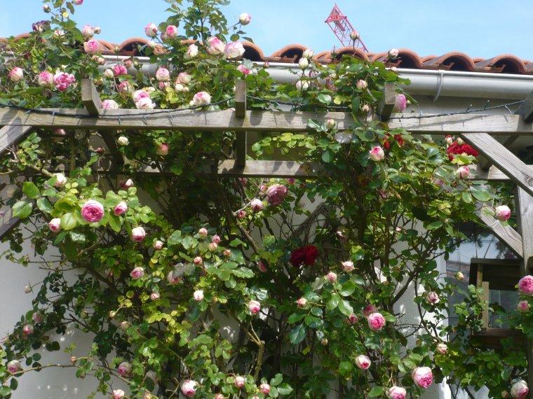 quelques photos de mon jardin !!