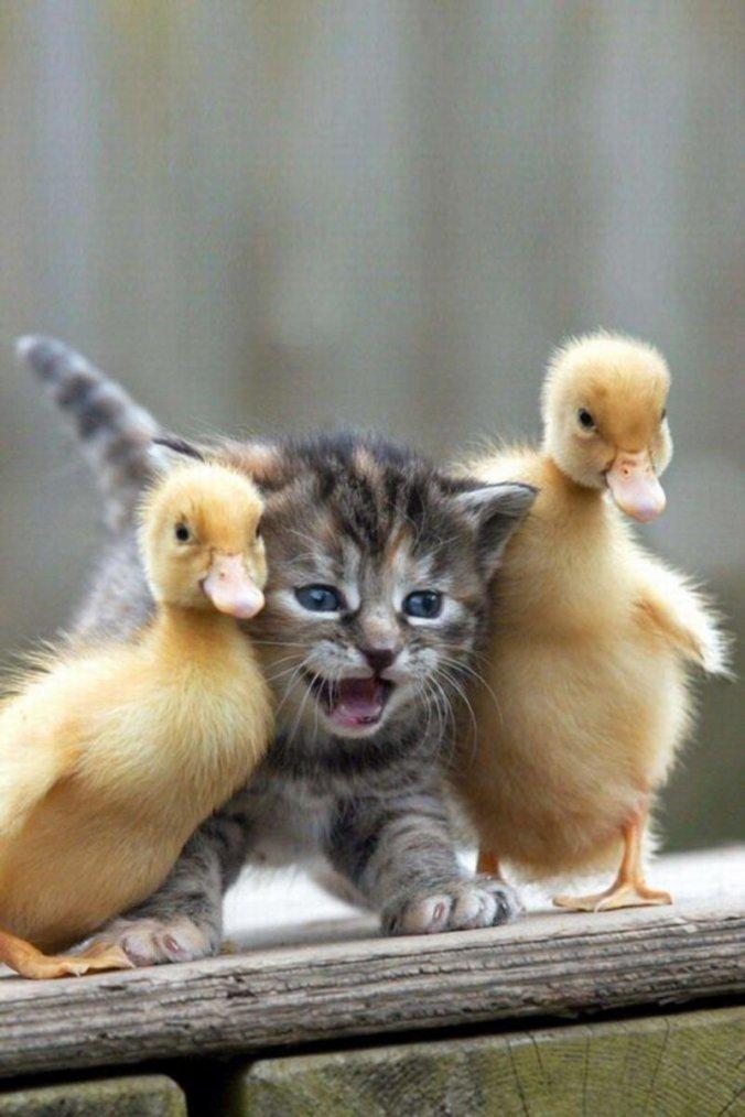 tendresses animales !!