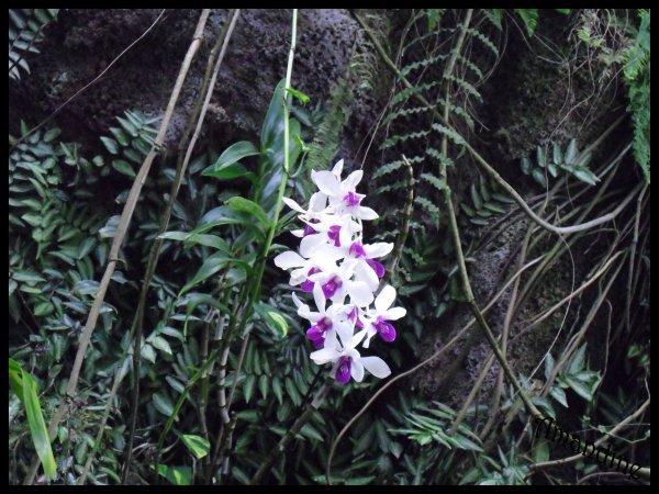 Photographie : Fleurs